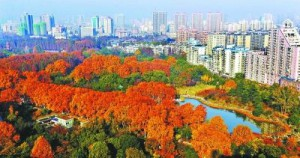 初冬に武漢市解放公園で散歩